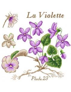 Passion Bonheur - La Violette