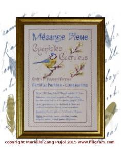 Filigram - fiche - Mésange Bleue - Fiche ornithologique